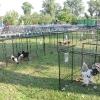 Výstava chovatelů 2009